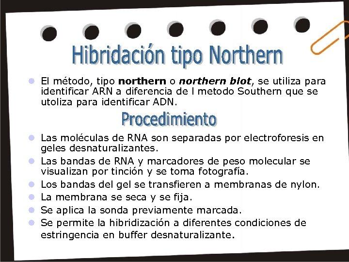l El método, tipo northern blot, se utiliza para identificar ARN a diferencia de