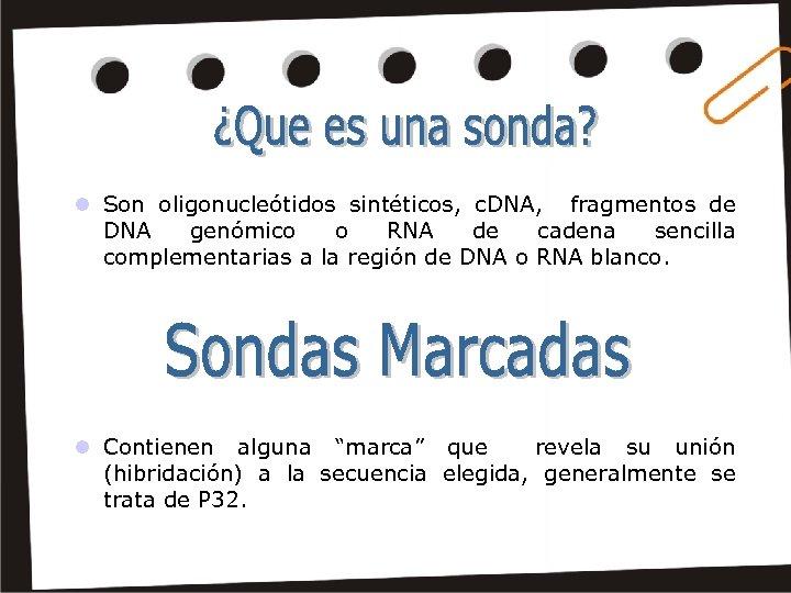 l Son oligonucleótidos sintéticos, c. DNA, fragmentos de DNA genómico o RNA de cadena