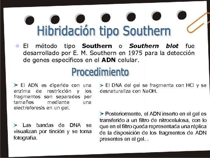 l El método tipo Southern blot fue desarrollado por E. M. Southern en 1975