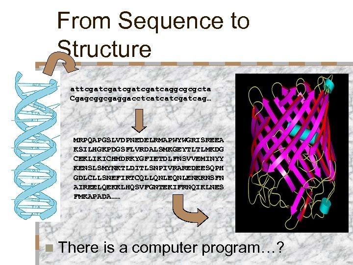From Sequence to Structure attcgatcgatcaggcgcgcta Cgagcggcgaggacctcatcatcgatcag… MRPQAPGSLVDPNEDELRMAPWYWGRISREEA KSILHGKPDGSFLVRDALSMKGEYTLTLMKDG CEKLIKICHMDRKYGFIETDLFNSVVEMINYY KENSLSMYNKTLDITLSNPIVRAREDEESQPH GDLCLLSNEFIRTCQLLQNLENKRNSFN AIREELQEKKLHQSVFGNTEKIFRNQIKLNES FMKAPADA…… n