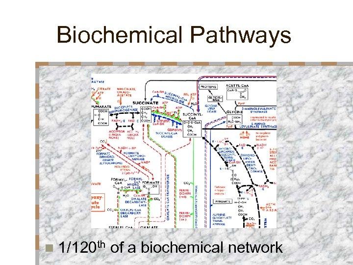 Biochemical Pathways n 1/120 th of a biochemical network