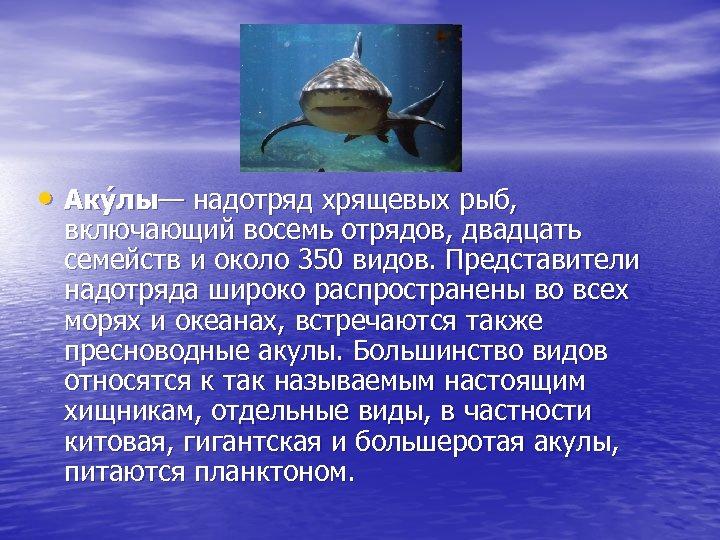 • Аку лы— надотряд хрящевых рыб, включающий восемь отрядов, двадцать семейств и около