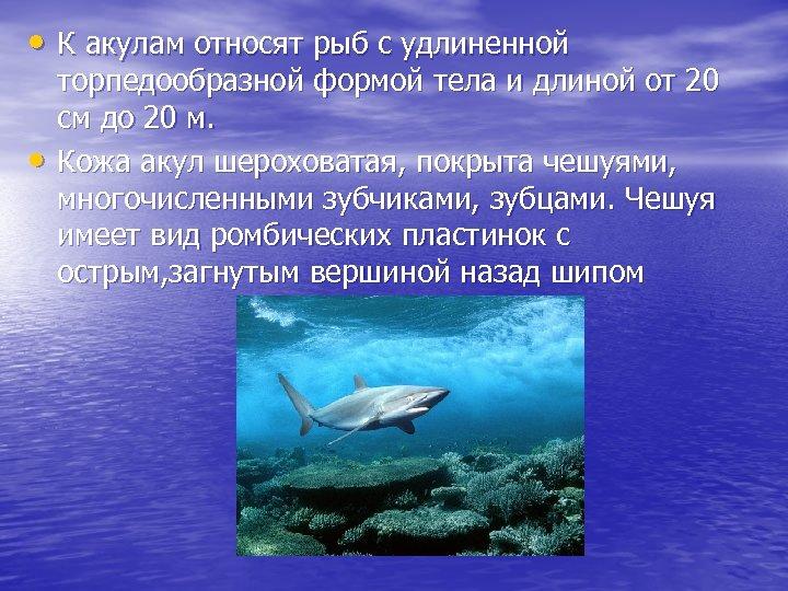 • К акулам относят рыб с удлиненной • торпедообразной формой тела и длиной