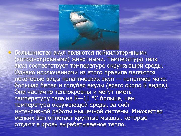 • Большинство акул являются пойкилотермными (холоднокровными) животными. Температура тела акул соответствует температуре окружающей