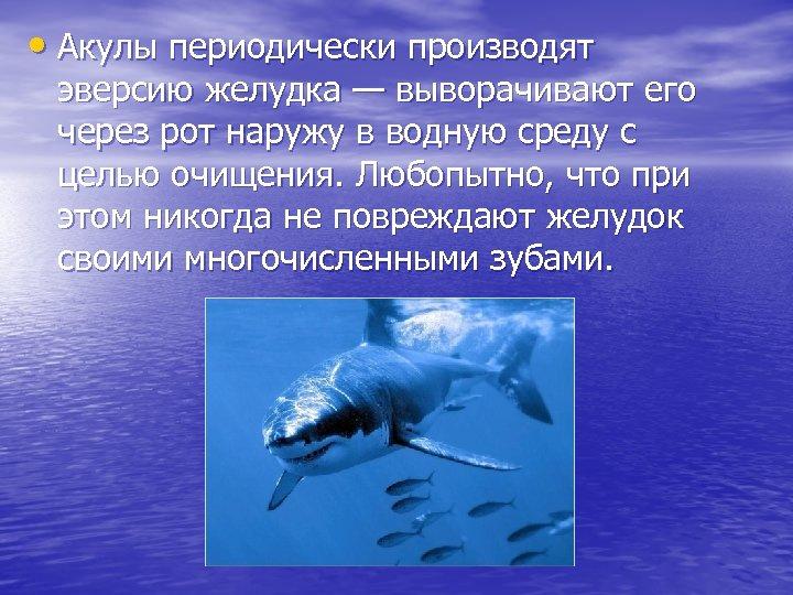 • Акулы периодически производят эверсию желудка — выворачивают его через рот наружу в