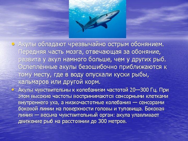 • Акулы обладают чрезвычайно острым обонянием. Передняя часть мозга, отвечающая за обоняние, развита
