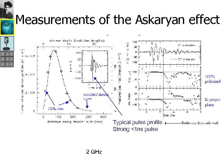 Measurements of the Askaryan effect Typical pulse profile Strong <1 ns pulse 2 GHz