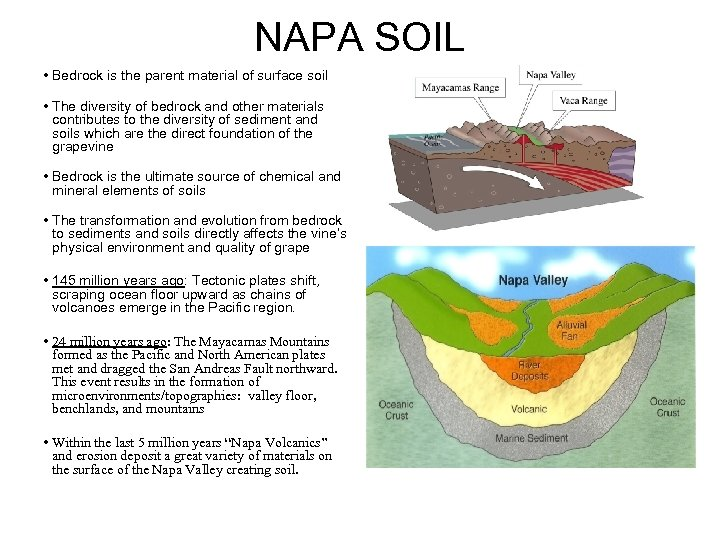 NAPA SOIL • Bedrock is the parent material of surface soil • The diversity