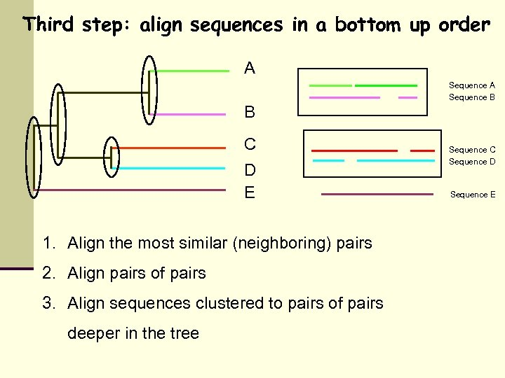 Third step: align sequences in a bottom up order A Sequence B B C