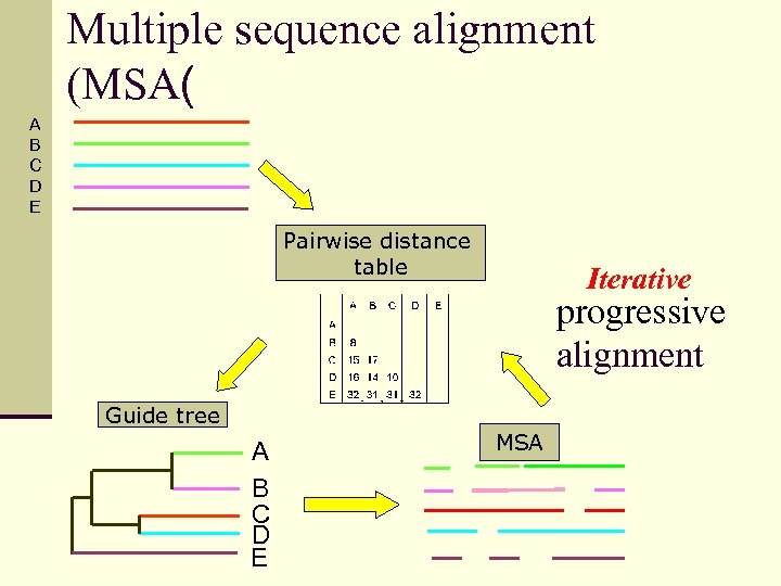 Multiple sequence alignment (MSA( A B C D E Pairwise distance table Iterative progressive