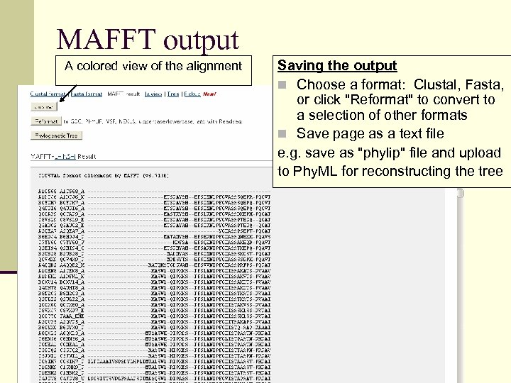 MAFFT output A colored view of the alignment Saving the output n Choose a