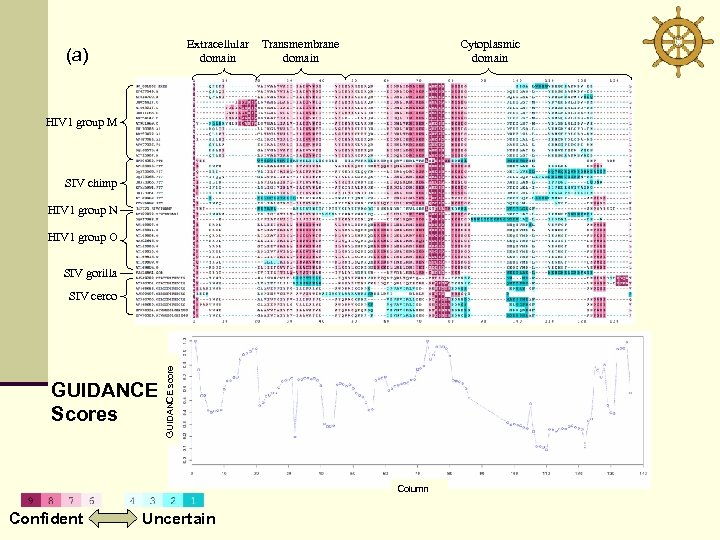 Extracellular domain (a) Transmembrane domain Cytoplasmic domain HIV 1 group M SIV chimp HIV