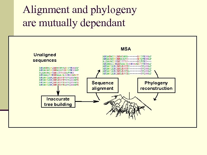 Alignment and phylogeny are mutually dependant MSA Unaligned sequences Sequence alignment Inaccurate tree building