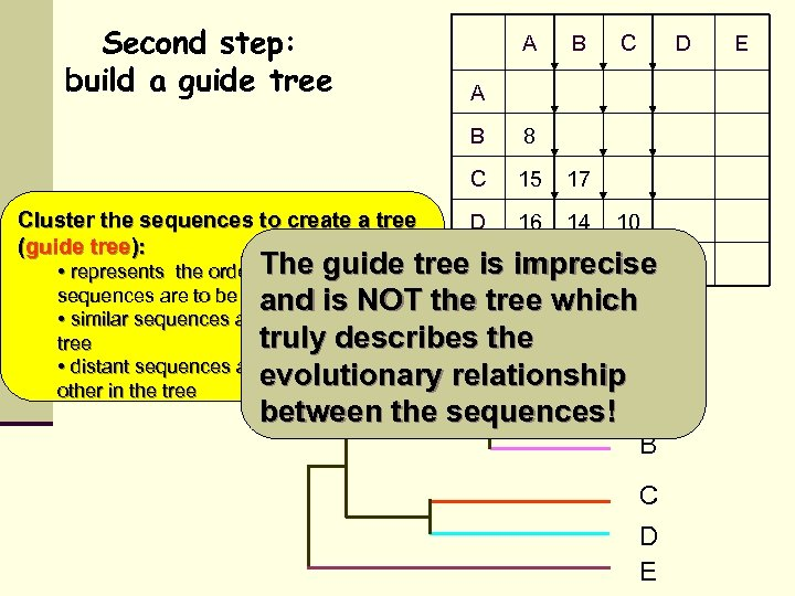 Second step: build a guide tree A B D A B 8 C Cluster