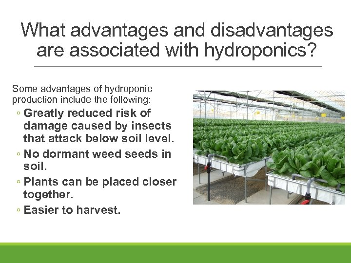 What advantages and disadvantages are associated with hydroponics? Some advantages of hydroponic production include