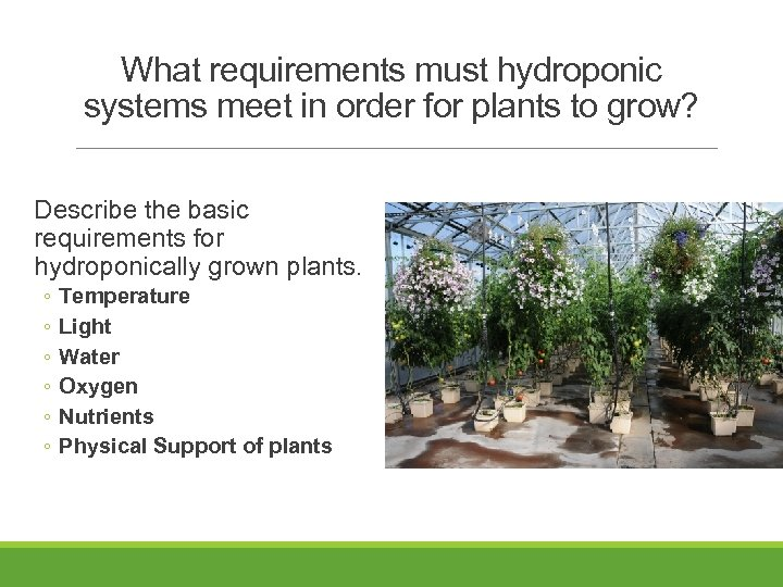 What requirements must hydroponic systems meet in order for plants to grow? Describe the