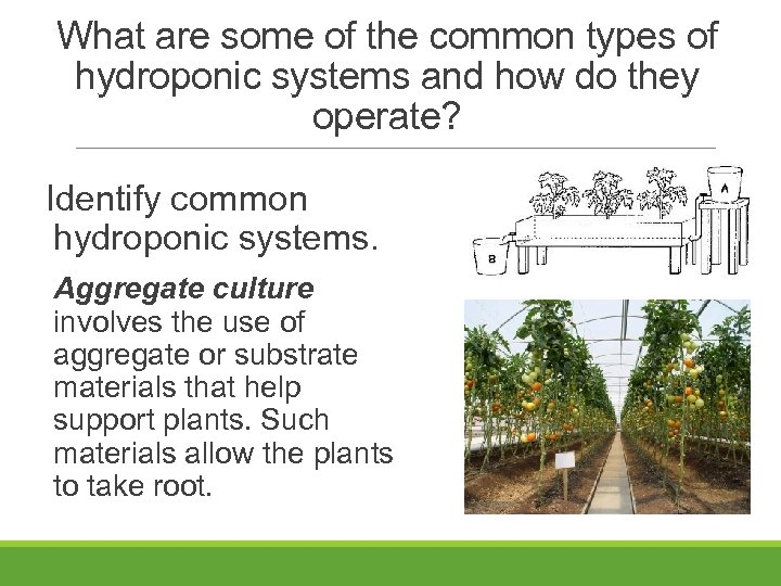 What are some of the common types of hydroponic systems and how do they