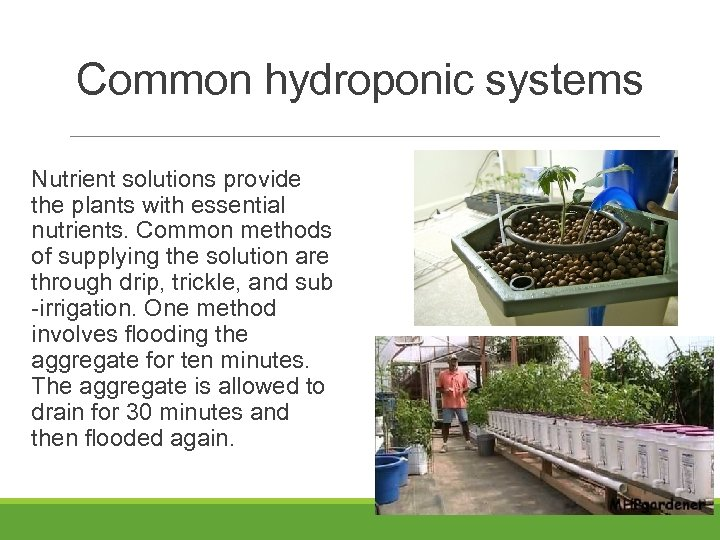 Common hydroponic systems Nutrient solutions provide the plants with essential nutrients. Common methods of