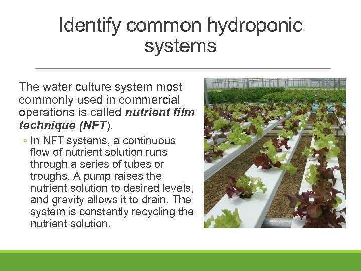 Identify common hydroponic systems The water culture system most commonly used in commercial operations