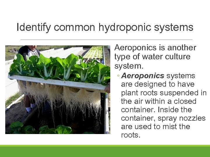 Identify common hydroponic systems Aeroponics is another type of water culture system. ◦ Aeroponics