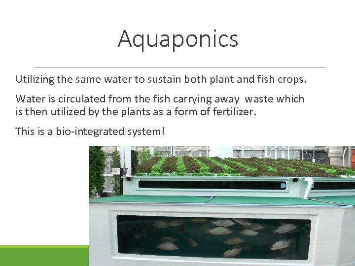 Aquaponics Utilizing the same water to sustain both plant and fish crops. Water is