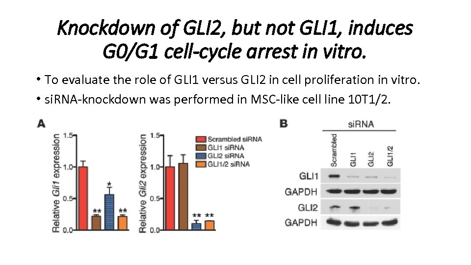 Knockdown of GLI 2, but not GLI 1, induces G 0/G 1 cell-cycle arrest