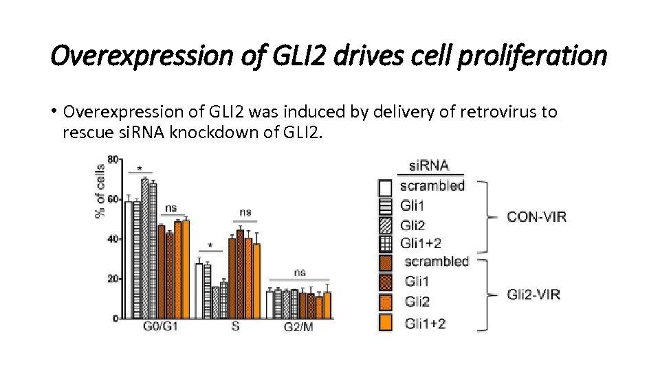 Overexpression of GLI 2 drives cell proliferation • Overexpression of GLI 2 was induced