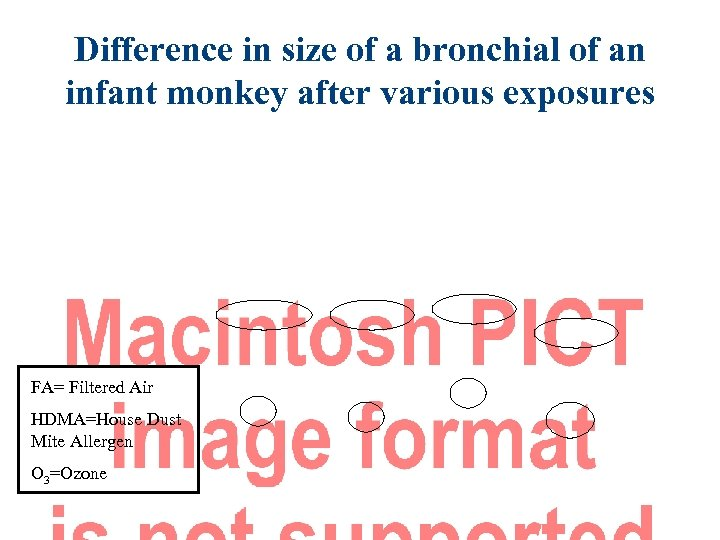 Difference in size of a bronchial of an infant monkey after various exposures FA=