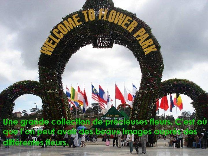Une grande collection de précieuses fleurs. C'est où que l'on peut avoir des