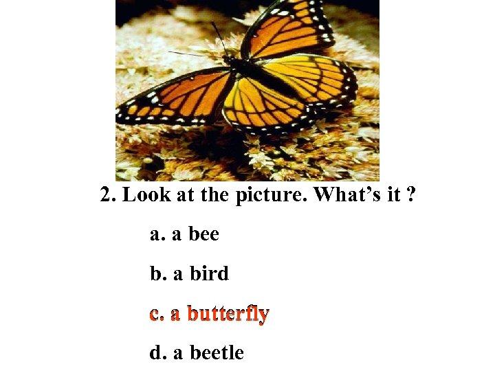 2. Look at the picture. What's it ? a. a bee b. a bird
