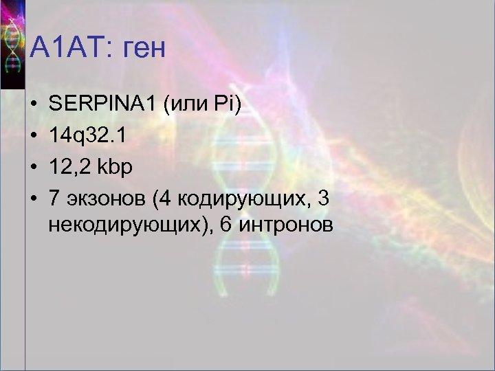 А 1 АТ: ген • • SERPINA 1 (или Pi) 14 q 32. 1