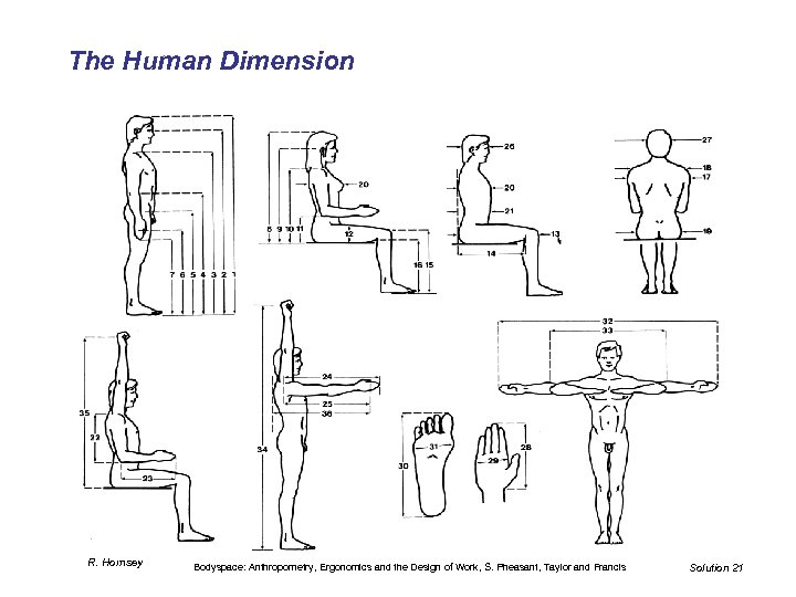 The Human Dimension R. Hornsey Bodyspace: Anthropometry, Ergonomics and the Design of Work, S.
