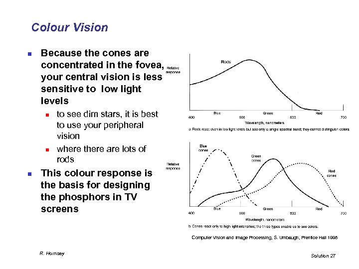 Colour Vision n Because the cones are concentrated in the fovea, your central vision