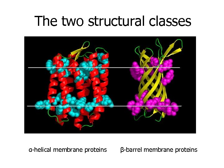 The two structural classes α-helical membrane proteins β-barrel membrane proteins