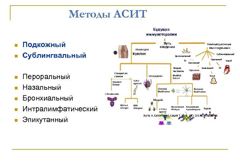 Методы АСИТ Будущее иммунотерапии Подкожный Сублингвальный Инъекции Путь введения Неинъекционные Сублингвальный Бронхиальный Оральный Накожный