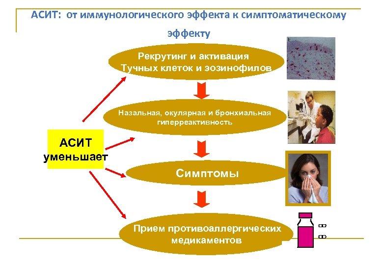 АСИТ: от иммунологического эффекта к симптоматическому эффекту Рекрутинг и активация Тучных клеток и эозинофилов