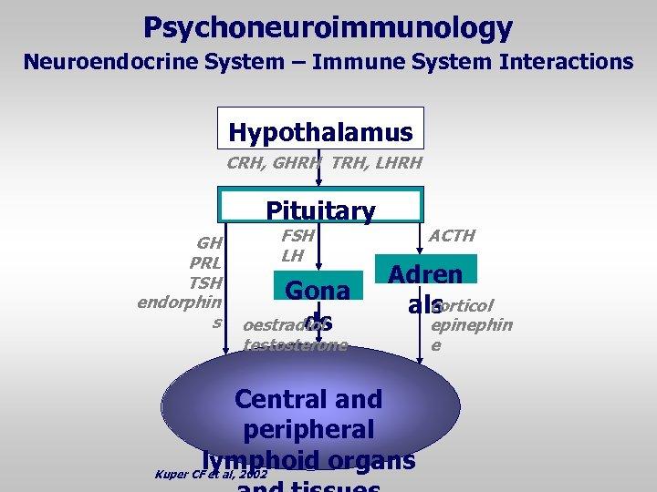 Psychoneuroimmunology Neuroendocrine System – Immune System Interactions Hypothalamus CRH, GHRH TRH, LHRH Pituitary GH