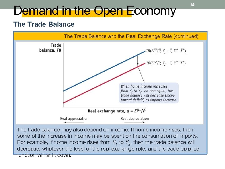 Demand in the Open Economy 14 The Trade Balance and the Real Exchange Rate