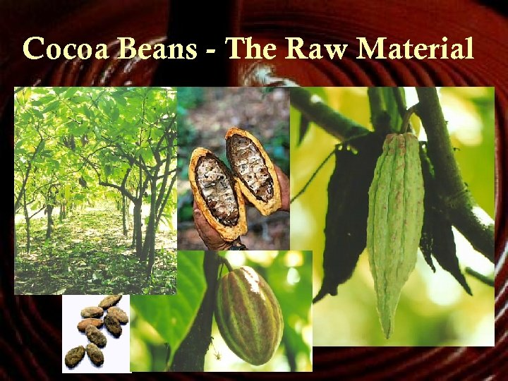 Cocoa Beans - The Raw Material