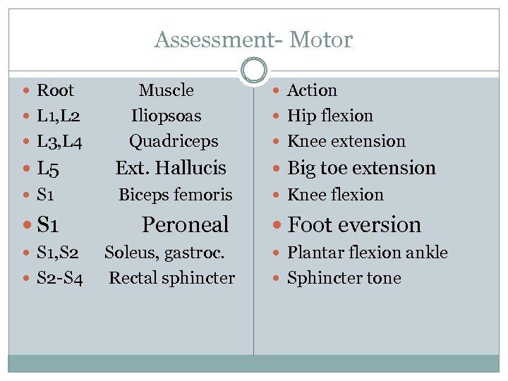 Assessment- Motor Root L 1, L 2 L 3, L 4 Muscle Iliopsoas Quadriceps