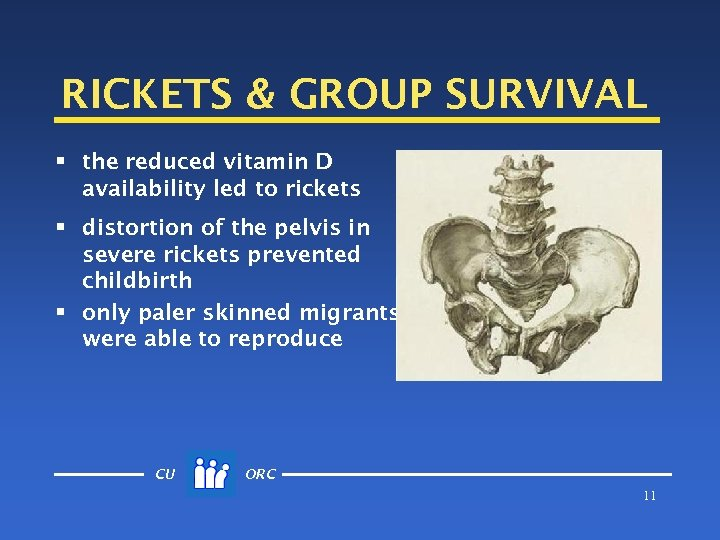 RICKETS & GROUP SURVIVAL § the reduced vitamin D availability led to rickets §