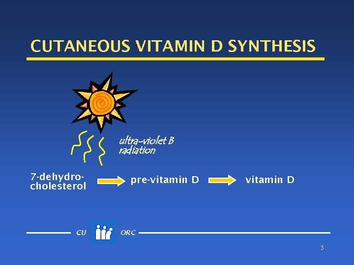 CUTANEOUS VITAMIN D SYNTHESIS ultra-violet B radiation 7 -dehydrocholesterol CU pre-vitamin D ORC 3