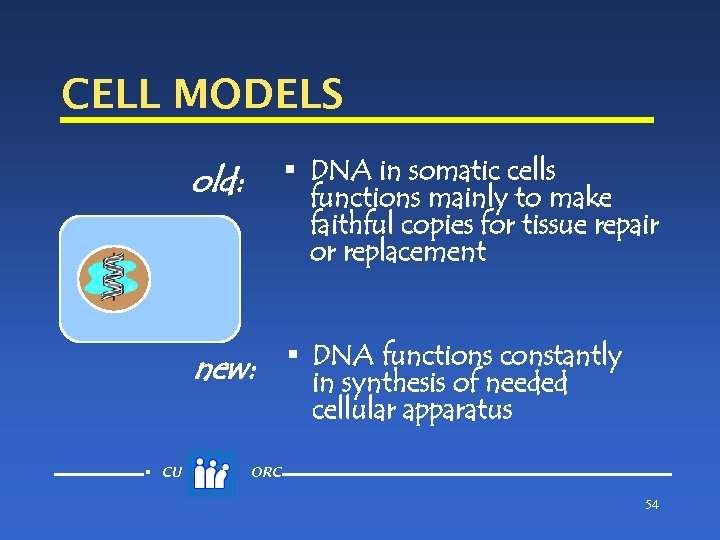 CELL MODELS § DNA in somatic cells functions mainly to make faithful copies for