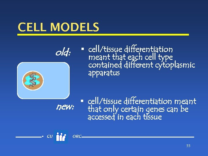 CELL MODELS old: § cell/tissue differentiation meant that each cell type contained different cytoplasmic