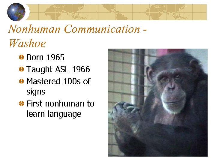 Nonhuman Communication Washoe Born 1965 Taught ASL 1966 Mastered 100 s of signs First