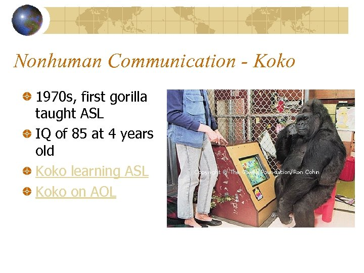 Nonhuman Communication - Koko 1970 s, first gorilla taught ASL IQ of 85 at