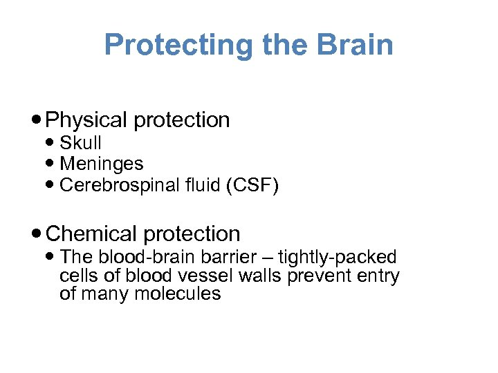 Protecting the Brain Physical protection Skull Meninges Cerebrospinal fluid (CSF) Chemical protection The blood-brain