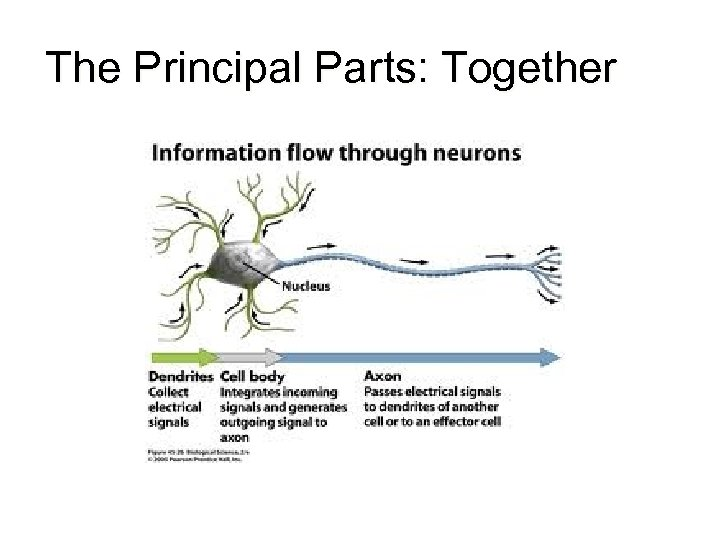 The Principal Parts: Together