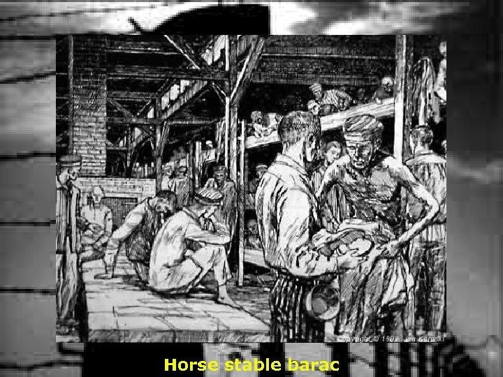 Horse stable barac