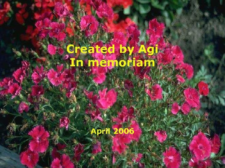 Created by Agi In memoriam April 2006